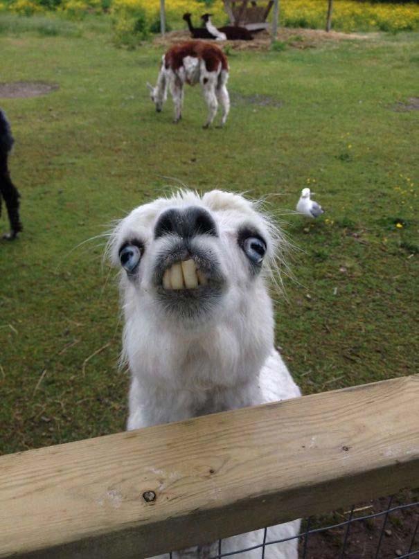 Ξεκαρδιστικές φωτογραφίες ζώων που δεν έχουν ίχνος φωτογένειας (3)
