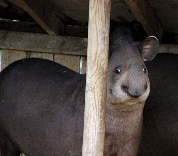 Ξεκαρδιστικές φωτογραφίες ζώων που δεν έχουν ίχνος φωτογένειας (7)