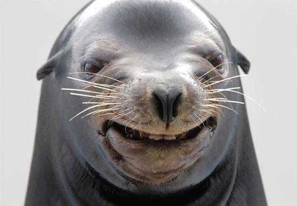 Ξεκαρδιστικές φωτογραφίες ζώων που δεν έχουν ίχνος φωτογένειας (8)