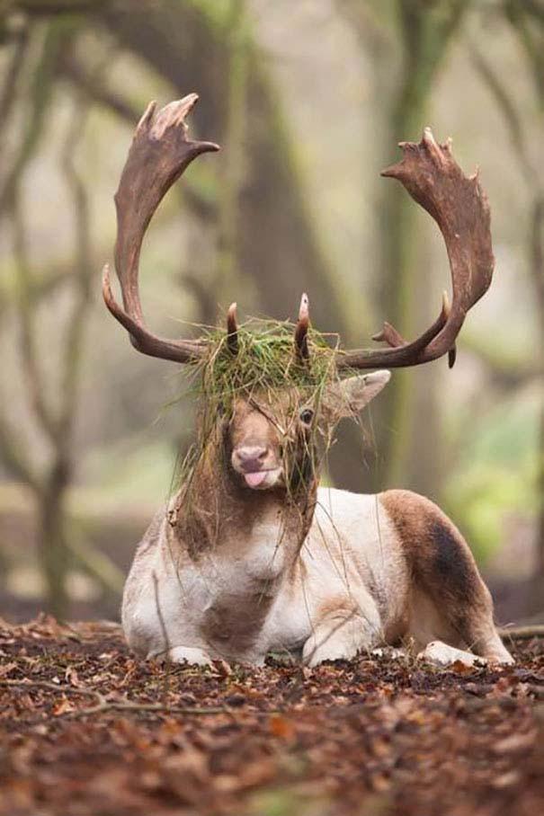 Ξεκαρδιστικές φωτογραφίες ζώων που δεν έχουν ίχνος φωτογένειας (10)