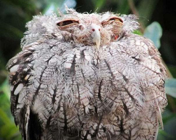 Ξεκαρδιστικές φωτογραφίες ζώων που δεν έχουν ίχνος φωτογένειας (12)