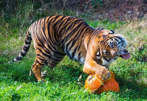 Ξεκαρδιστικές φωτογραφίες ζώων που δεν έχουν ίχνος φωτογένειας (13)