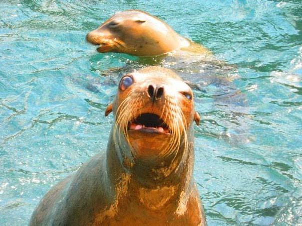 Ξεκαρδιστικές φωτογραφίες ζώων που δεν έχουν ίχνος φωτογένειας (14)