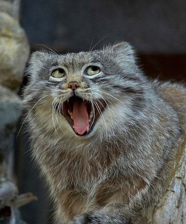 Ξεκαρδιστικές φωτογραφίες ζώων που δεν έχουν ίχνος φωτογένειας (17)