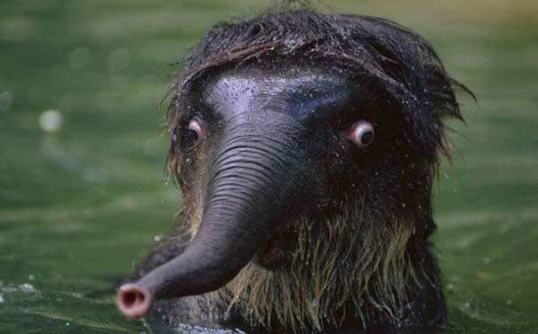 Ξεκαρδιστικές φωτογραφίες ζώων που δεν έχουν ίχνος φωτογένειας (18)