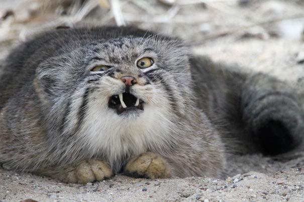 Ξεκαρδιστικές φωτογραφίες ζώων που δεν έχουν ίχνος φωτογένειας (21)