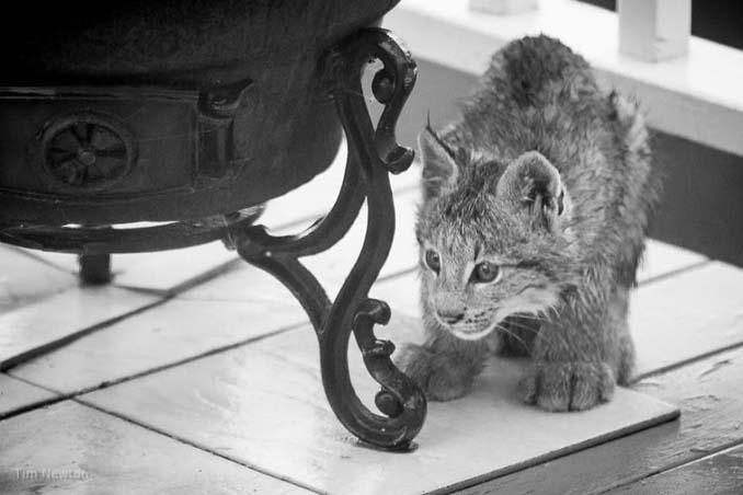 Ένας άνδρας ξύπνησε από παράξενο θόρυβο, και βρήκε κάτι εντελώς απρόσμενο στη βεράντα του (10)