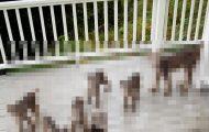 Ένας άνδρας ξύπνησε από παράξενο θόρυβο, και βρήκε κάτι εντελώς απρόσμενο στη βεράντα του