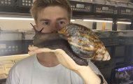 Το μεγαλύτερο σαλιγκάρι που έχετε δει