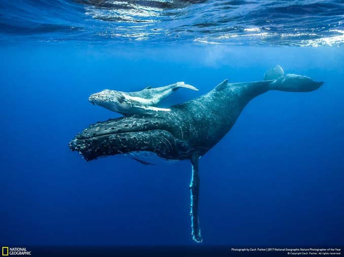 National Geographic Nature Photographer of the Year 2017 (14)