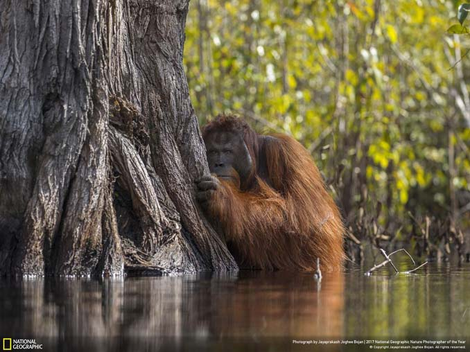 National Geographic Nature Photographer of the Year 2017 (23)
