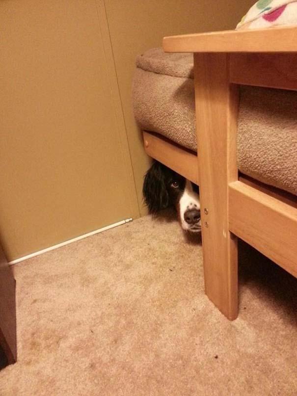 Παιδιά και κατοικίδια που παίζουν κρυφτό με ξεκαρδιστικό τρόπο (9)