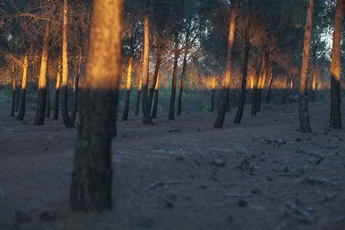 Project Συμπτώσεων - Οι απίθανες φωτογραφίες του Denis Cherim (20)