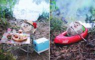 Σκαντζόχοιρος κάνει camping