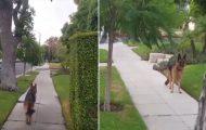 Η απίθανη αντίδραση ενός σκύλου όταν συνειδητοποιεί πως ο ιδιοκτήτης του έχει εξαφανιστεί από πίσω του