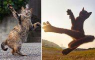 Φωτογράφος απαθανατίζει γάτες Ninja
