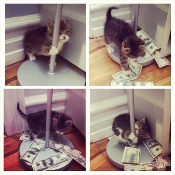 Γάτες που... κάνουν τα δικά τους! #70 (2)