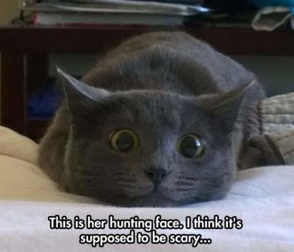 Γάτες που... κάνουν τα δικά τους! #69 (3)
