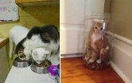 Γάτες που... κάνουν τα δικά τους! #70 (11)