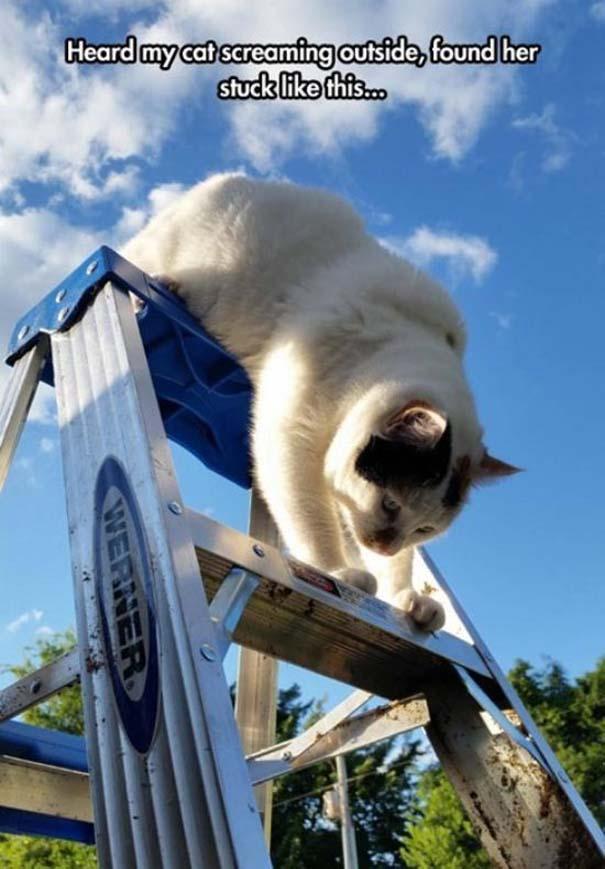 Γάτες που... κάνουν τα δικά τους! #70 (3)