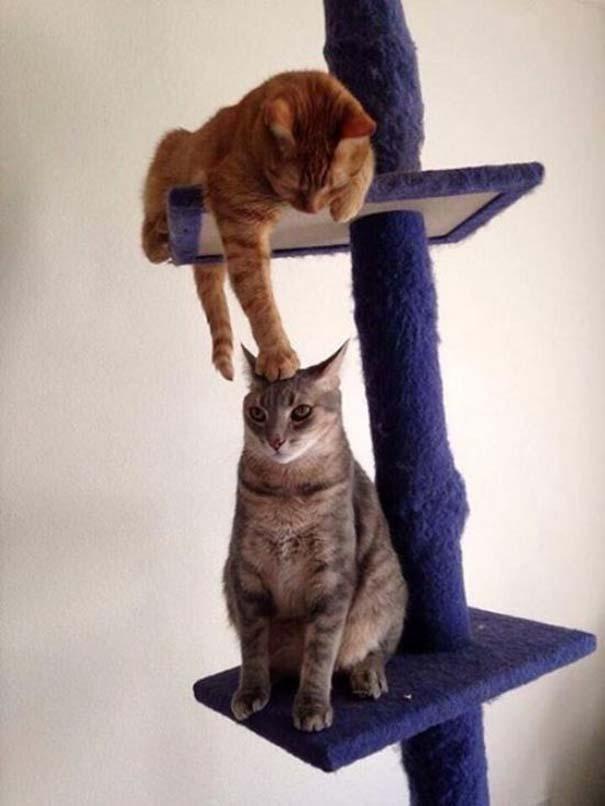 Γάτες που... κάνουν τα δικά τους! #69 (4)