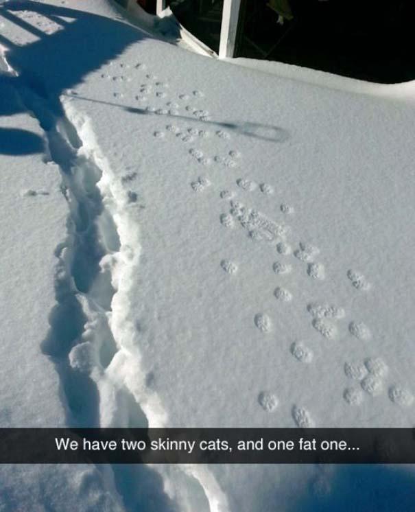 Γάτες που... κάνουν τα δικά τους! #69 (7)