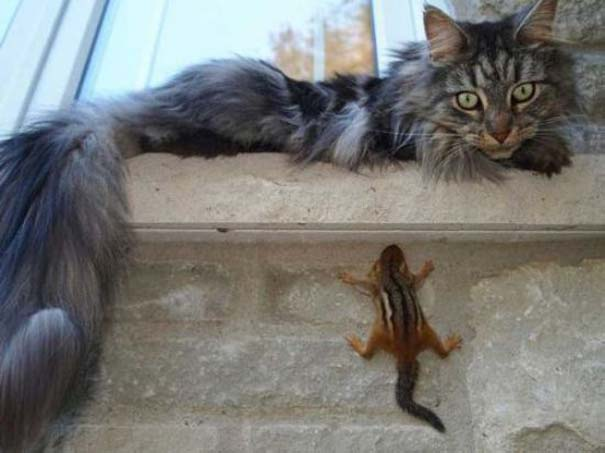 Γάτες που... κάνουν τα δικά τους! #69 (9)