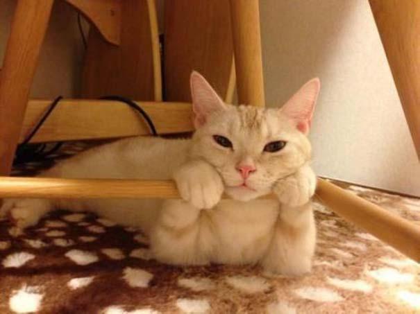Γάτες που... κάνουν τα δικά τους! #70 (5)