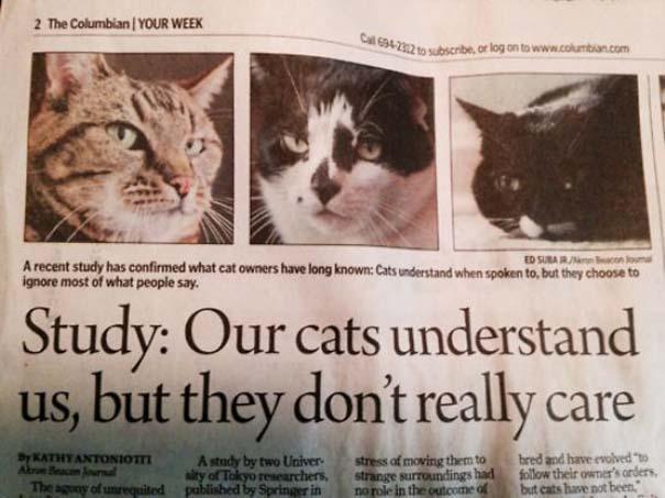 Γάτες που... κάνουν τα δικά τους! #70 (6)