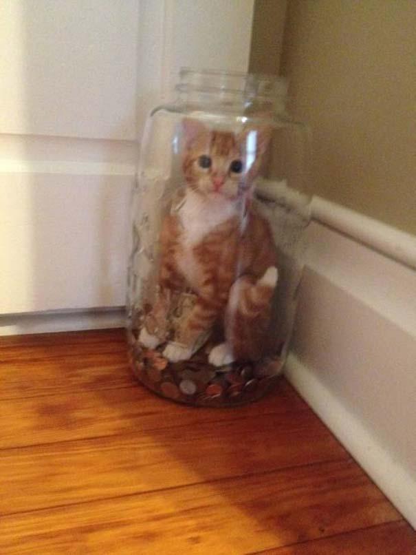 Γάτες που... κάνουν τα δικά τους! #70 (7)