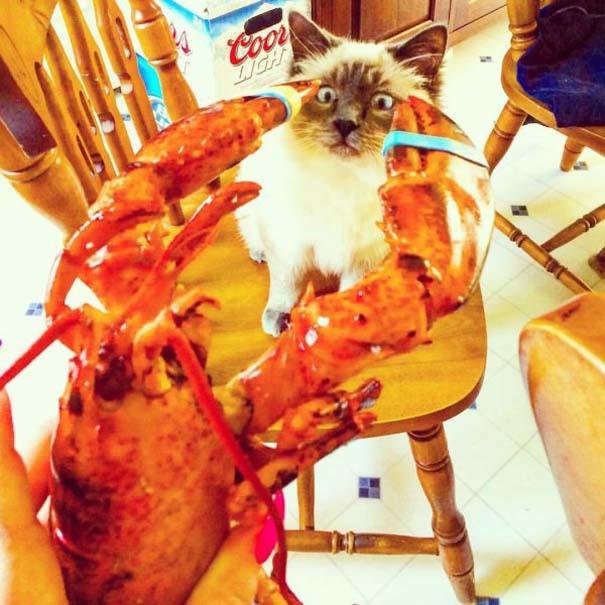 Γάτες που... κάνουν τα δικά τους! #71 (1)