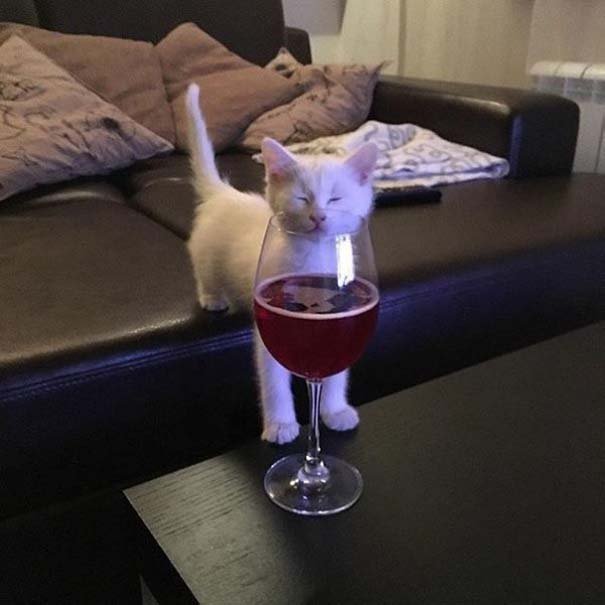 Γάτες που... κάνουν τα δικά τους! #72 (3)