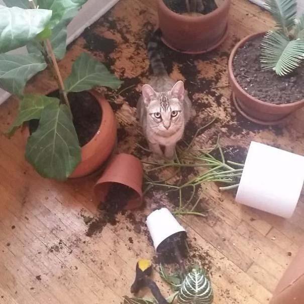 Γάτες που... κάνουν τα δικά τους! #71 (3)
