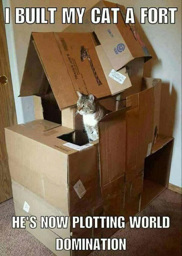 Γάτες που... κάνουν τα δικά τους! #71 (4)