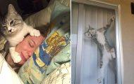 Γάτες που... κάνουν τα δικά τους! #72 (11)