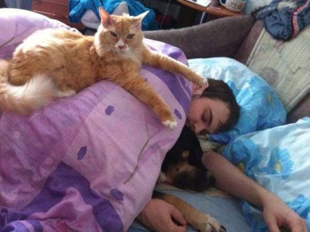 Γάτες που... κάνουν τα δικά τους! #71 (5)