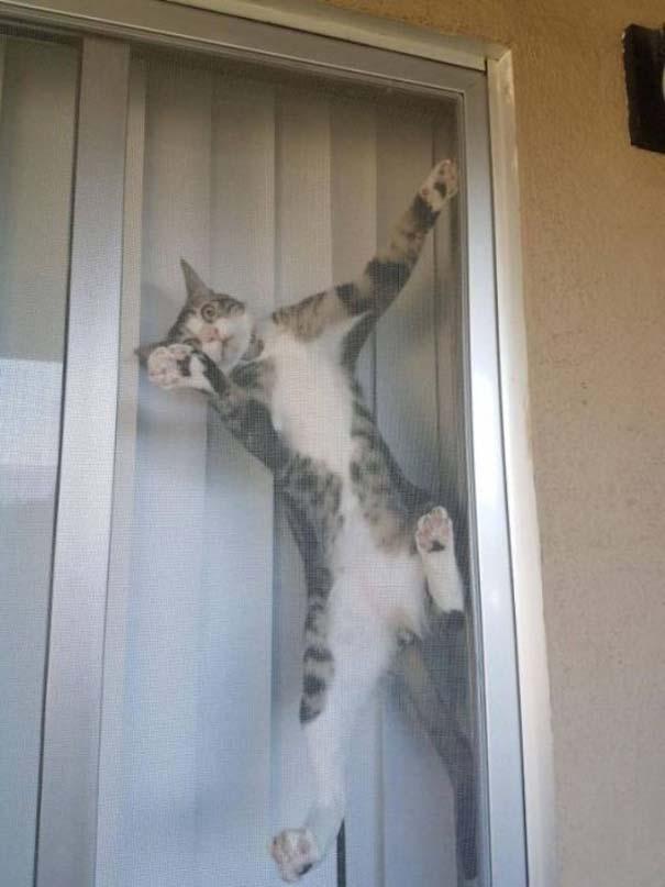 Γάτες που... κάνουν τα δικά τους! #72 (7)