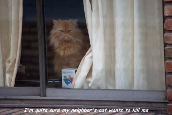 Γάτες που... κάνουν τα δικά τους! #72 (8)