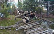 Panda σε ένα ξεκαρδιστικό ρεσιτάλ γκάφας και ατσουμπαλιάς