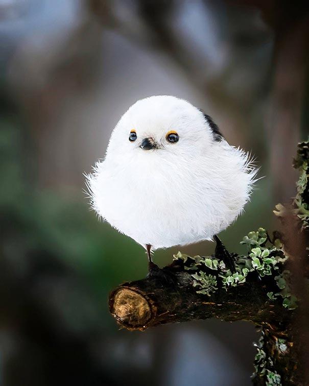 Πουλί ή χιονόμπαλα;   Φωτογραφία της ημέρας