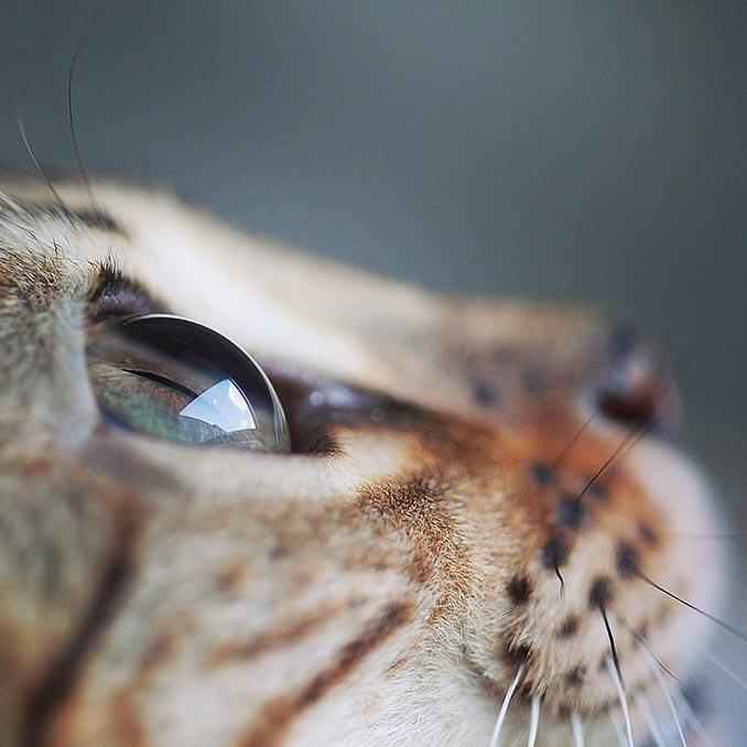 Βλέποντας τα πράγματα από διαφορετική οπτική... | Φωτογραφία της ημέρας