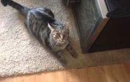 Πώς αντιδρά η γάτα σου όταν συνειδητοποιεί ότι χάιδεψες άλλη γάτα