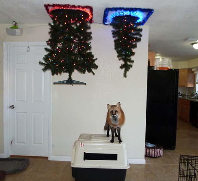 Πως να σώσετε το χριστουγεννιάτικο δέντρο από τα κατοικίδια (2)