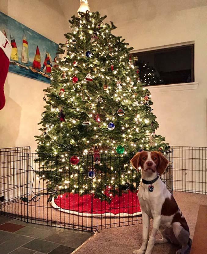 Πως να σώσετε το χριστουγεννιάτικο δέντρο από τα κατοικίδια (5)