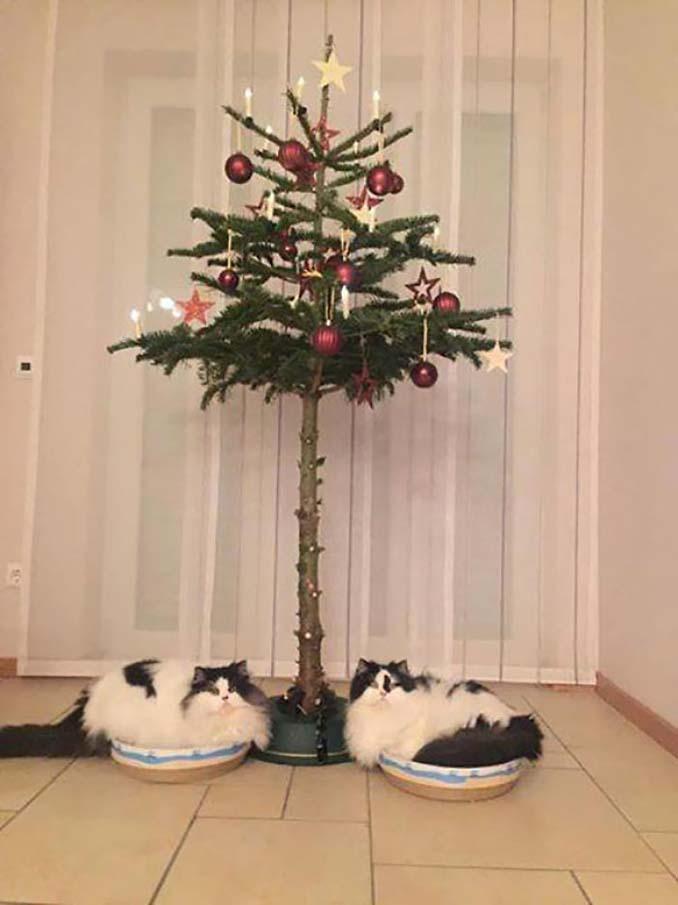 Πως να σώσετε το χριστουγεννιάτικο δέντρο από τα κατοικίδια (13)