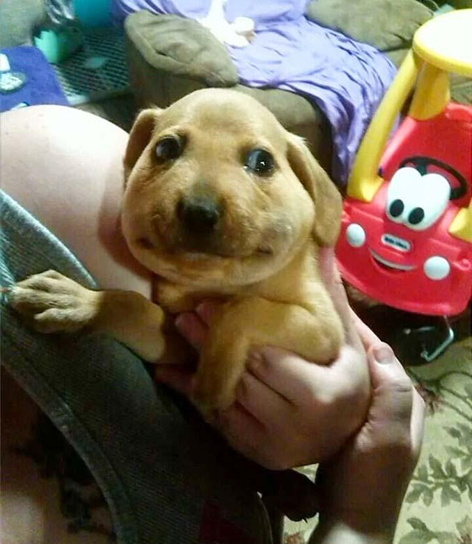 Σκύλοι που επιχείρησαν να φάνε μια μέλισσα (2)