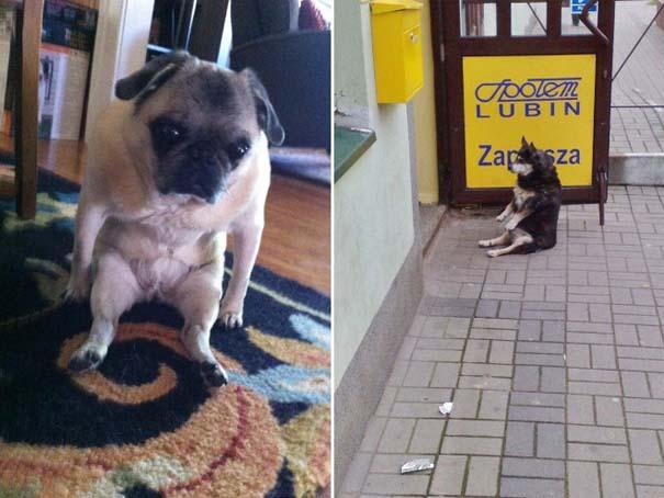 Σκύλοι που φαίνεται να έχουν βραχυκυκλώσει (4)
