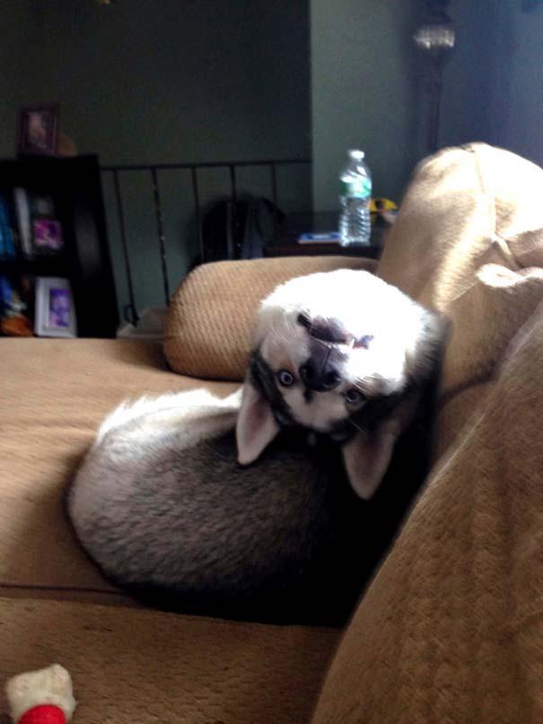 Σκύλοι που φαίνεται να έχουν βραχυκυκλώσει (6)