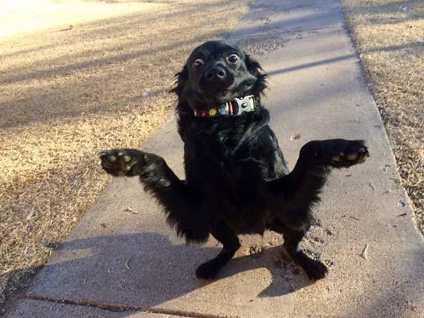 Σκύλοι που φαίνεται να έχουν βραχυκυκλώσει (7)