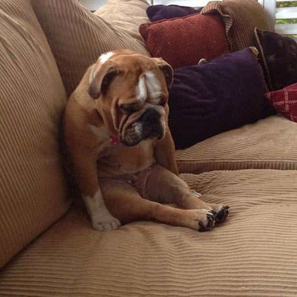 Σκύλοι που φαίνεται να έχουν βραχυκυκλώσει (9)